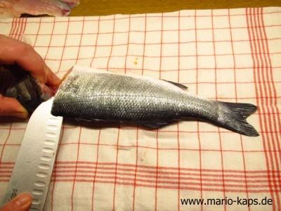 Rundfisch_filetieren03_10P