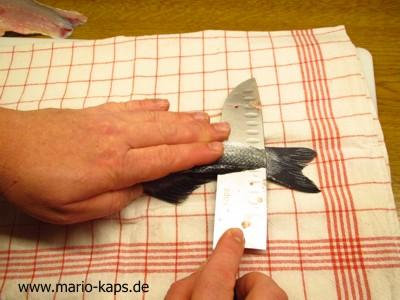 Rundfisch_filetieren06_10P