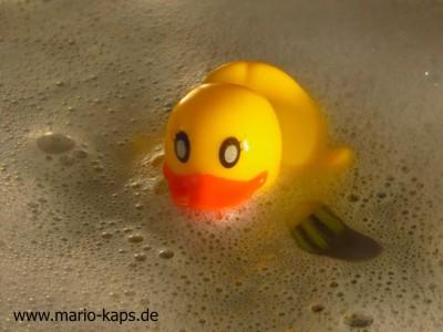 Ente im Wasser_10P