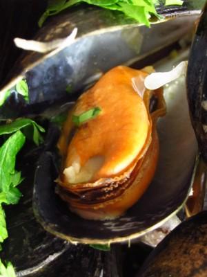 Gekochte Miesmuschel mit intaktem Muschelkörper